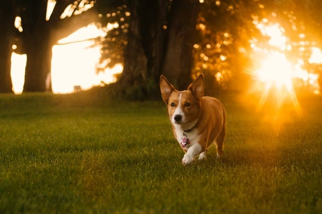 are led lights bad for dogs