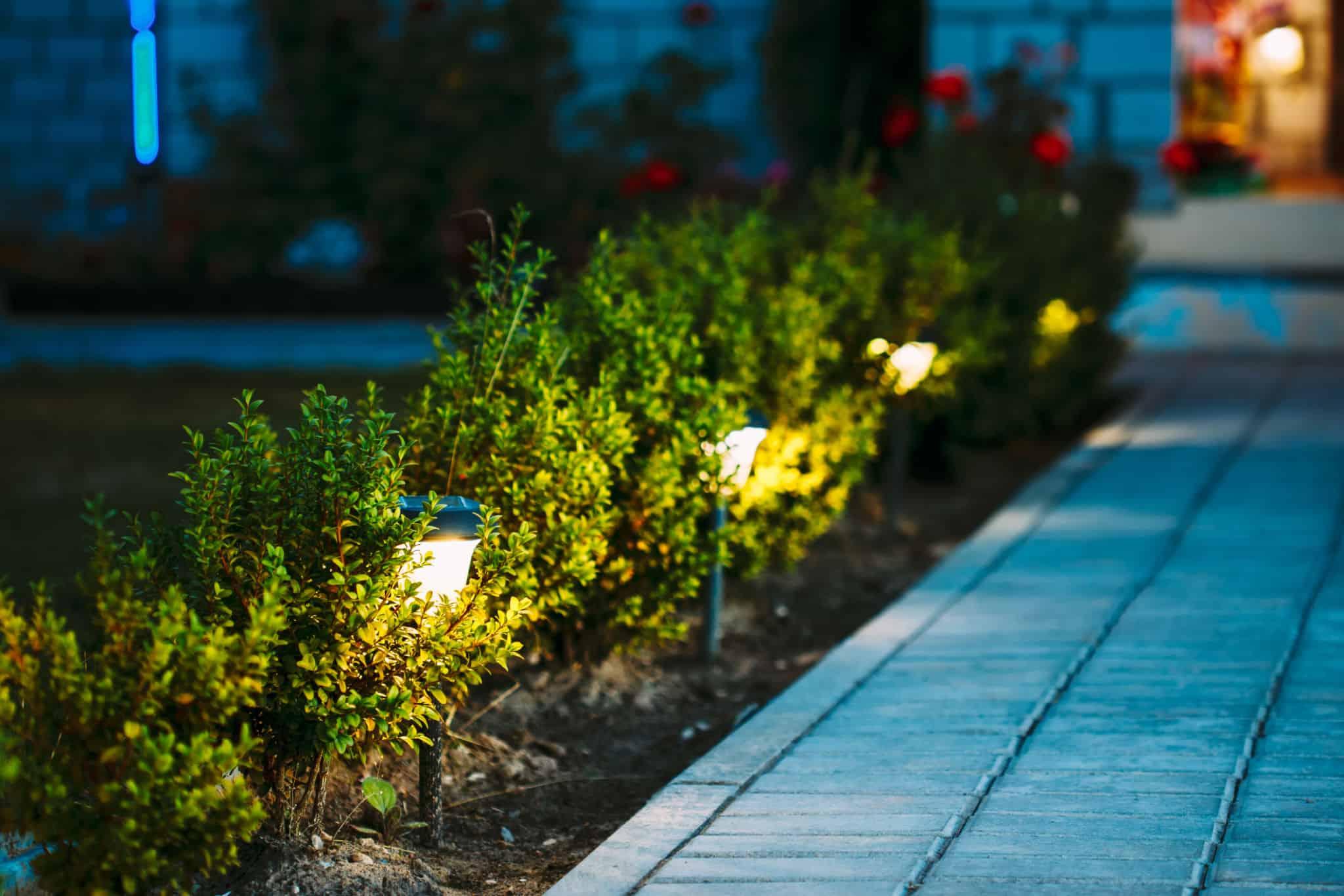 Best Light for Vegetative Growth